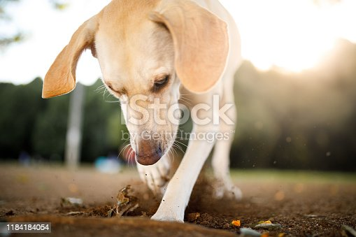 Dog playing in the park.