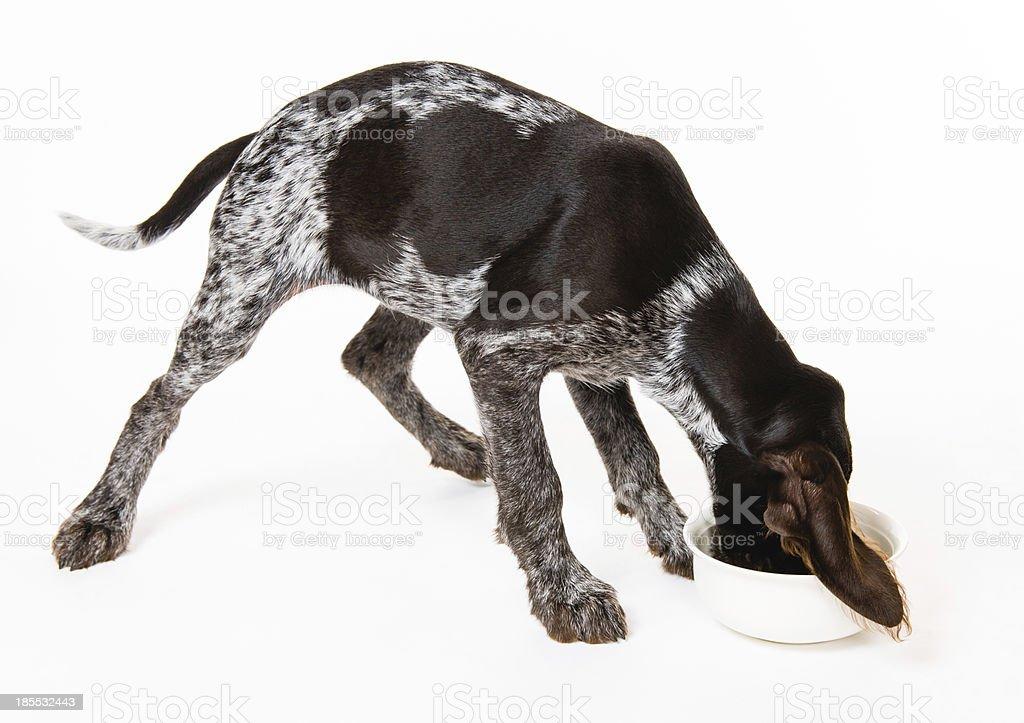 Dog dinner royalty-free stock photo