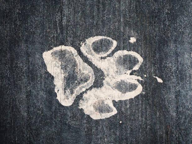 Perro sucio pista sobre un suelo de madera oscuro limpio - foto de stock