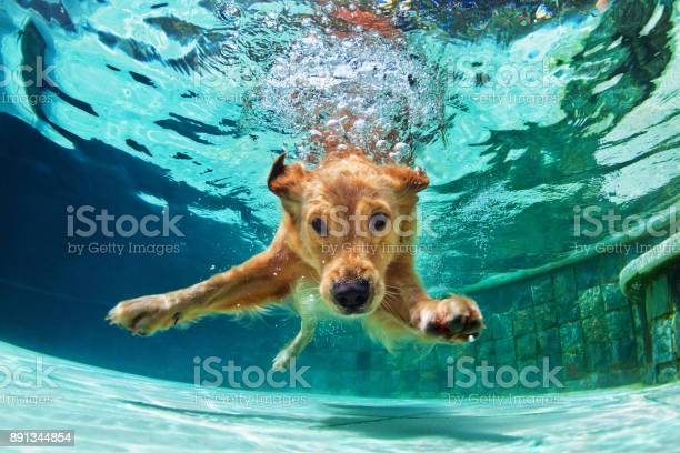 Dog diving underwater in swimming pool picture id891344854?b=1&k=6&m=891344854&s=612x612&h=5ckwmesi07 46oucyl96i kiprqp3l gsoaiguuevxq=