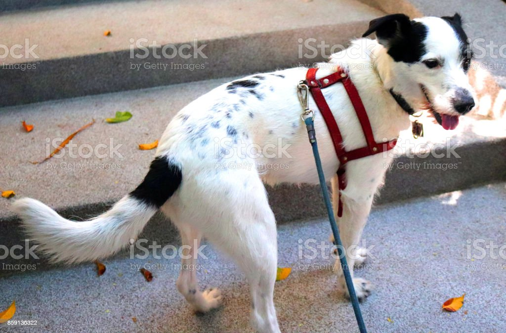 Dog domestic life stock photo