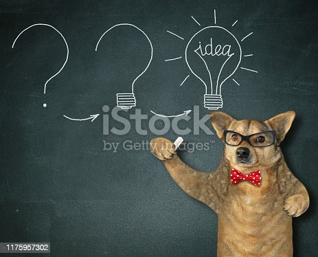 The dog scientist in a black tie, white collar and an academic hat is standing near the school blackboard on which a chalk drawn light bulb with a word