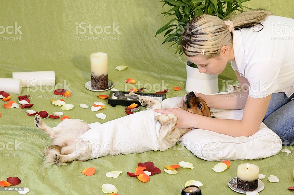 dog dream royalty-free stock photo