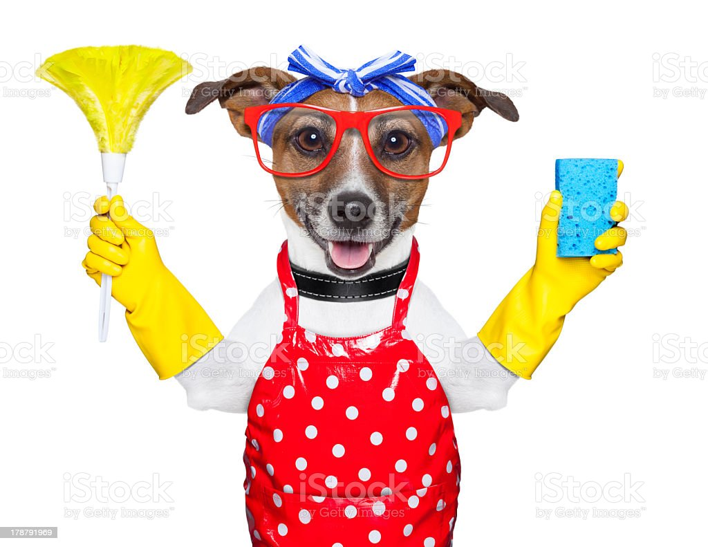 Dog dressed as a housewife with cleaning materials stock photo