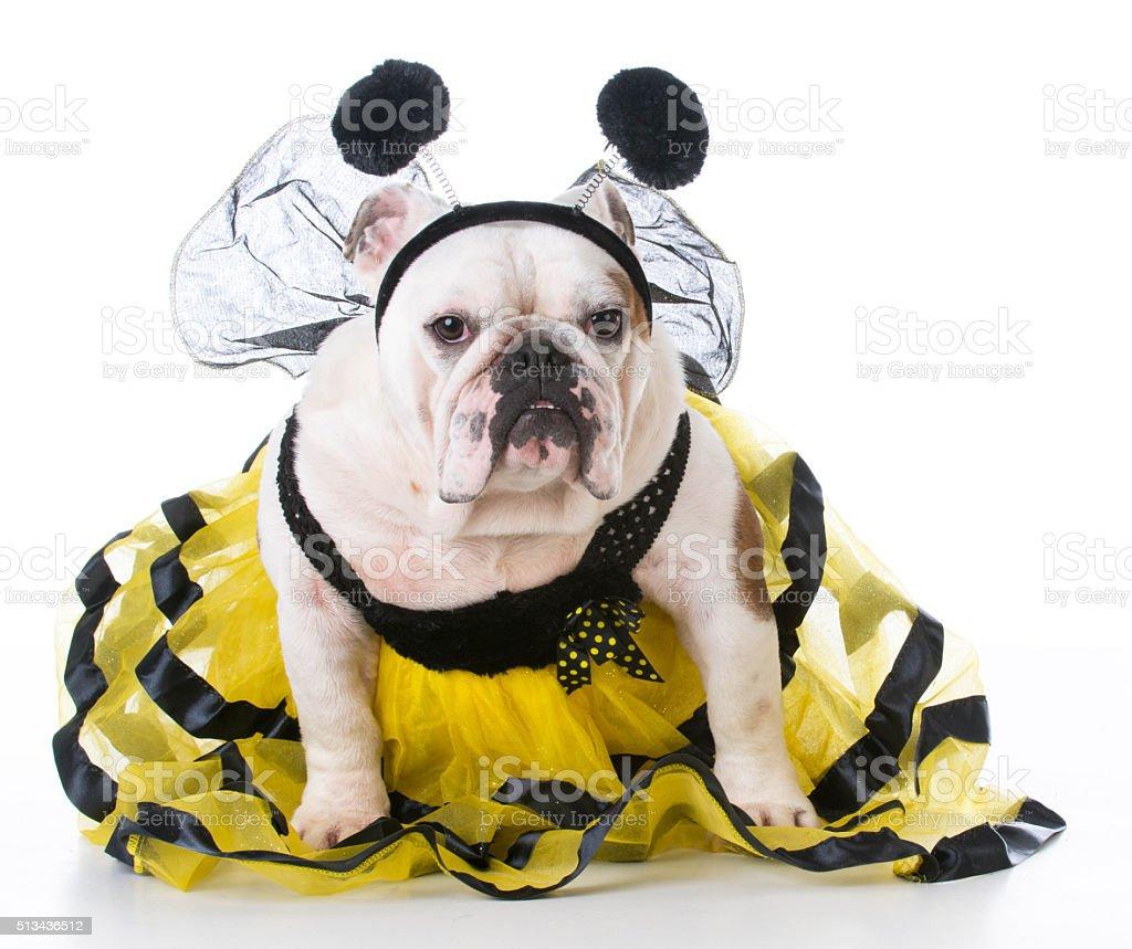 dog dressed like a bee stock photo