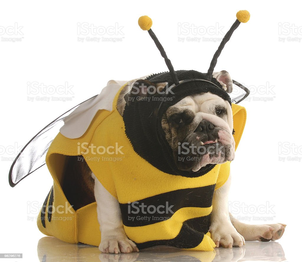 dog dressed up as a bee royalty-free stock photo