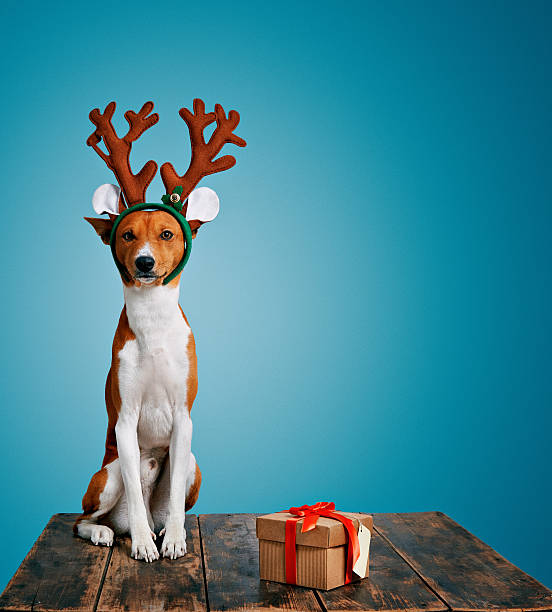 Dog dressed up as Christmas deer with present stock photo