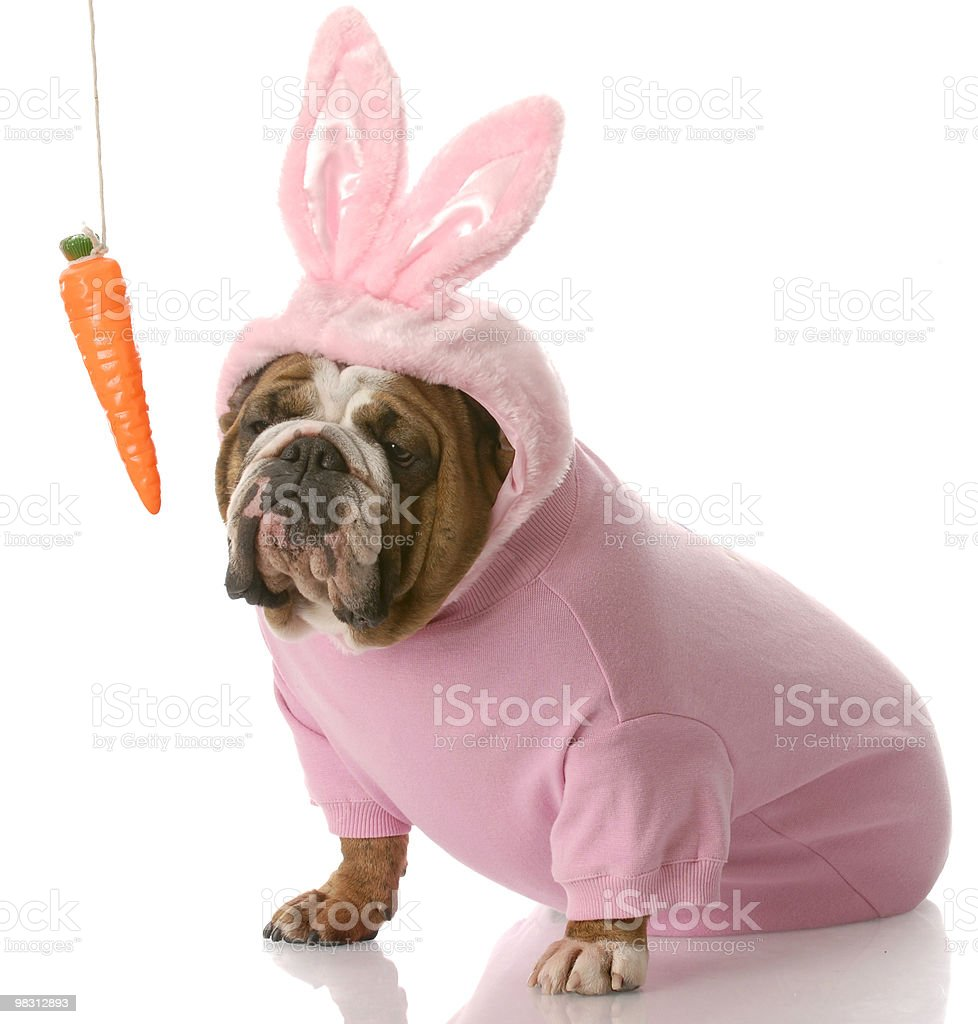 dog dressed up as easter bunny stock photo