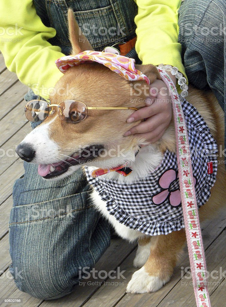 Dog dressed up as the child royalty-free stock photo