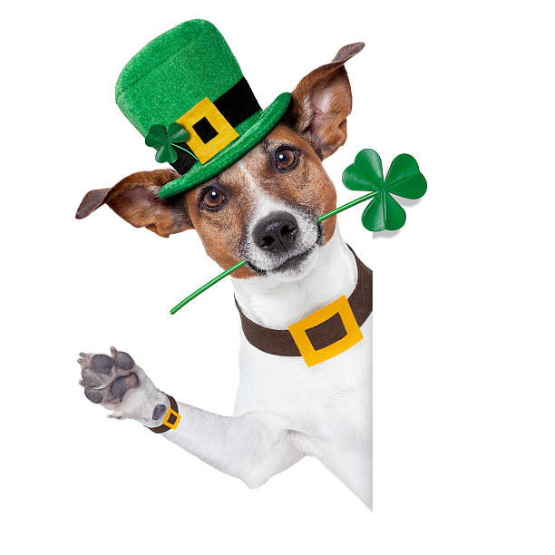 a dog dressed up for saint patrick's day - vroegmoderne tijd stockfoto's en -beelden