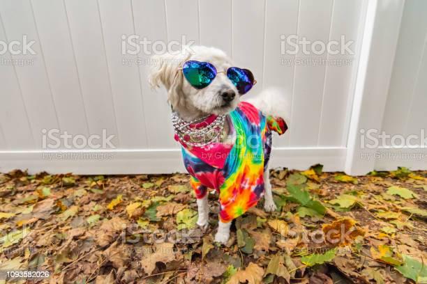 Dog dressed up like a hippie picture id1093582026?b=1&k=6&m=1093582026&s=612x612&h=v9vgvmklx2sq nwk vloognq5bovun6fv8hkany2sxk=