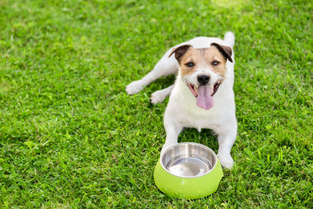 Hond drinkwater uit Doggy Bowl afkoelen op hete zomerdag foto