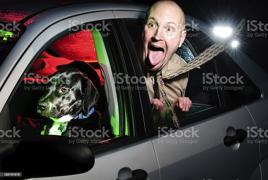 Dog Drving Car with Man in Back Seat stock photo