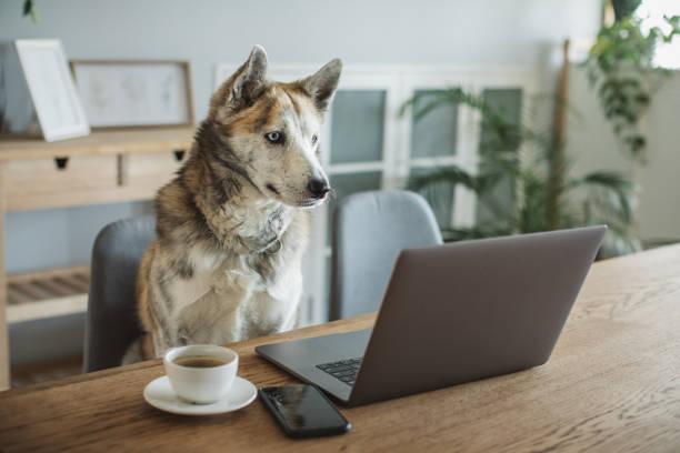 Dog during isolation period stock photo