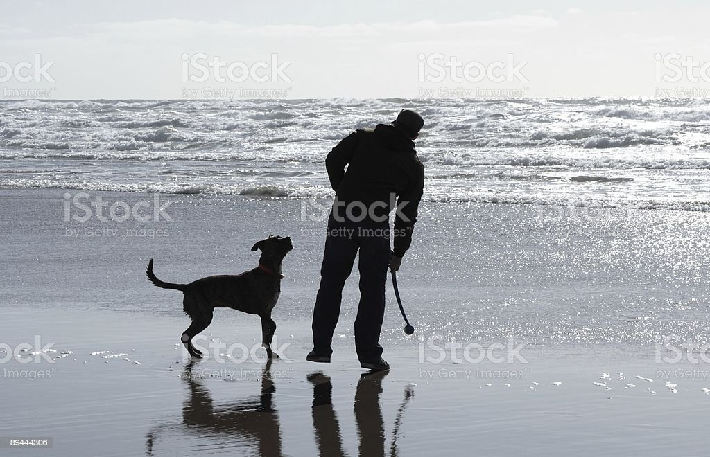 Dog eagerly waits to fetch royalty-free stock photo