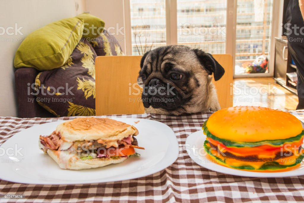 Dog eat royalty-free stock photo