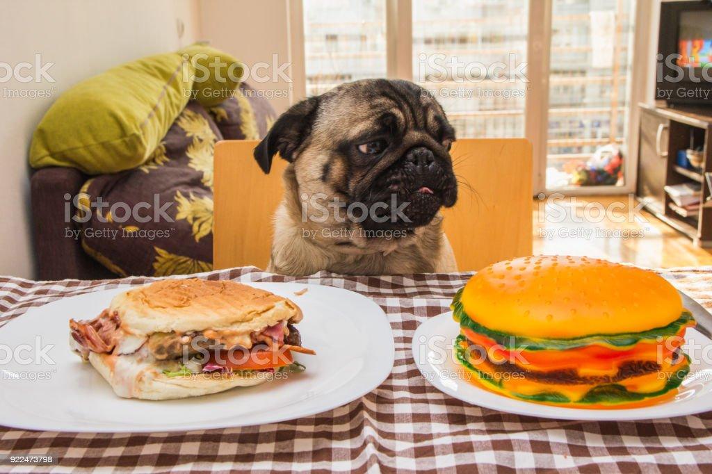 Dog eat stock photo