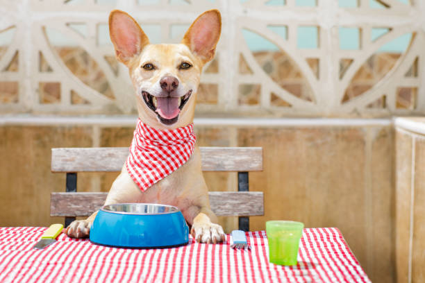 Dog eating a the table with food bowl picture id680812648?b=1&k=6&m=680812648&s=612x612&w=0&h=qu8falgdy9qusbgsst3vbjjagno3df9oqbzt0psrdnw=