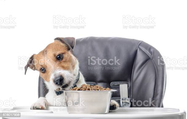 Dog eating dry food lunch from bowl picture id828017938?b=1&k=6&m=828017938&s=612x612&h=qwlbmi7vc5kqjxlwff6gy lahtbiqztffywbcprs8kk=