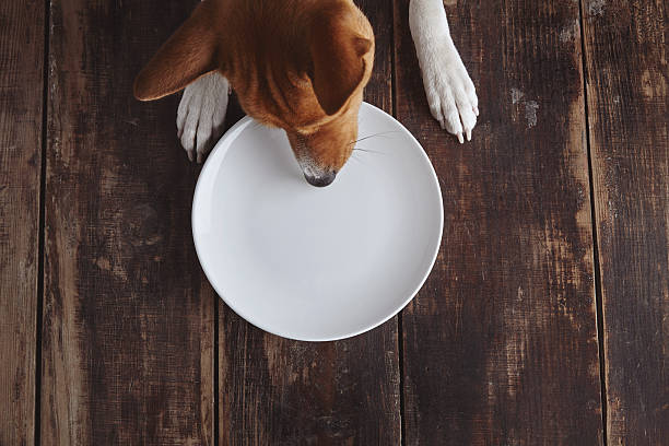 Dog eats from plate on old wooden table stock photo