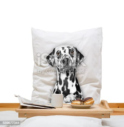 istock dog eats in bed and drink 539672344