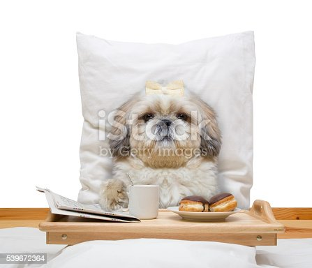 istock dog eats in bed and drink 539672364