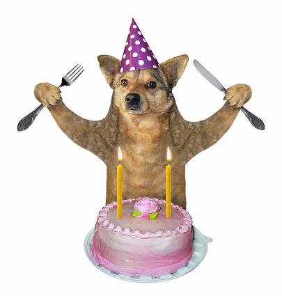 Prime Dog Eats The Birthday Cake 2 Stock Photo Download Image Now Istock Funny Birthday Cards Online Unhofree Goldxyz