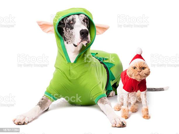 Dog elf costume cat santa suit isolated on white background picture id187617284?b=1&k=6&m=187617284&s=612x612&h=rr7ymxj4eqe7elylgv7oowzipwdvirq2hb1seet8qe8=