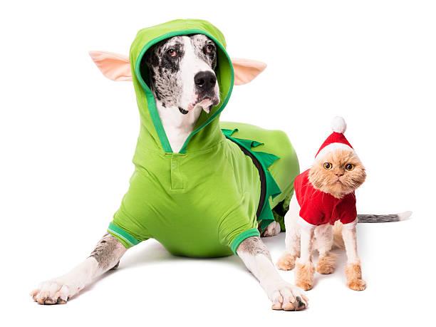 hund elf costume cat santa-anzug, isoliert auf weißem hintergrund - katze weihnachten stock-fotos und bilder