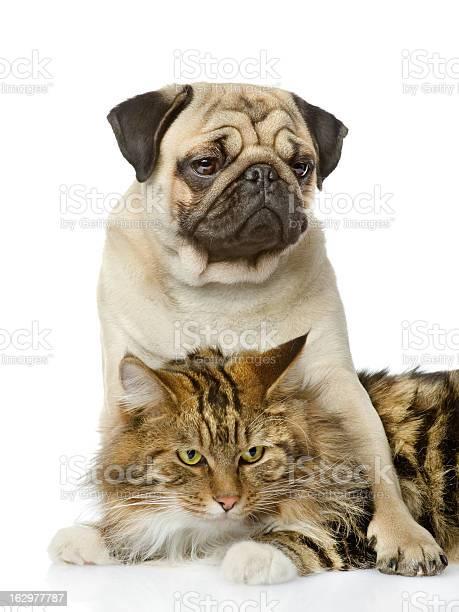 Dog embraces a cat picture id162977787?b=1&k=6&m=162977787&s=612x612&h=yqslnybhwd2rfoalq3tvgua32ou8ka0yhdfprrrwjgg=