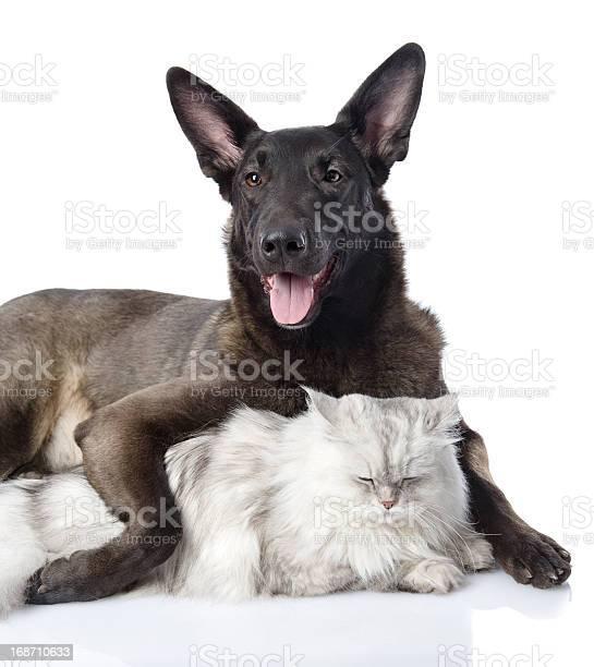 Dog embraces a cat picture id168710633?b=1&k=6&m=168710633&s=612x612&h=d0ry3xv0rax7nvmvxnyohjdwcuqhszmu9i3 erqaxey=