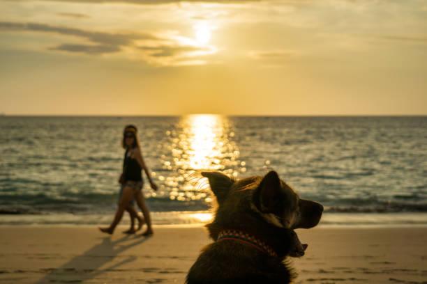 Dog enjoying beautiful sunset on the beach with couple walking hand picture id1190541696?b=1&k=6&m=1190541696&s=612x612&w=0&h=6oj14ueyashymzcbgontwcki8ttevdiyl1ikrsdseum=