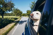istock Dog enjoying from traveling by car 1154959891