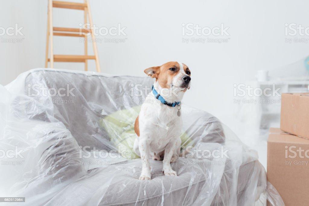 Dog enjoying his new house Стоковые фото Стоковая фотография
