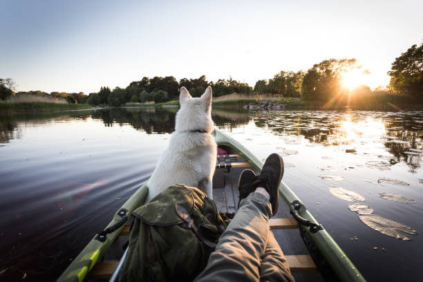 dog enjoys canoe on a river - point of view stock photos and pictures