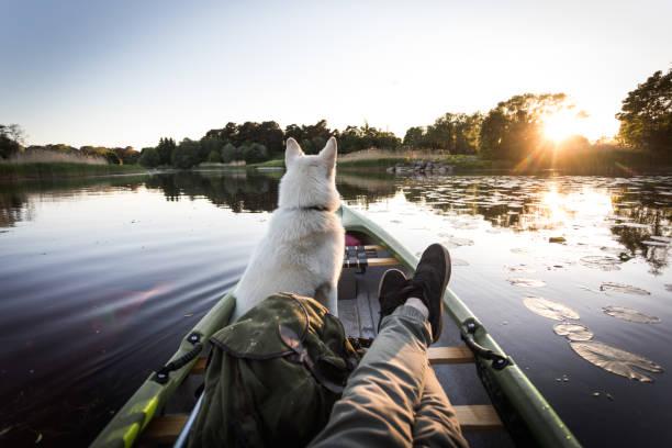 köpek bir nehrinde kano sahiptir - estonya stok fotoğraflar ve resimler