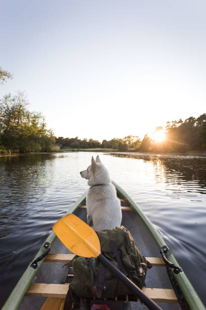 Dog enjoys canoe trip stock photo