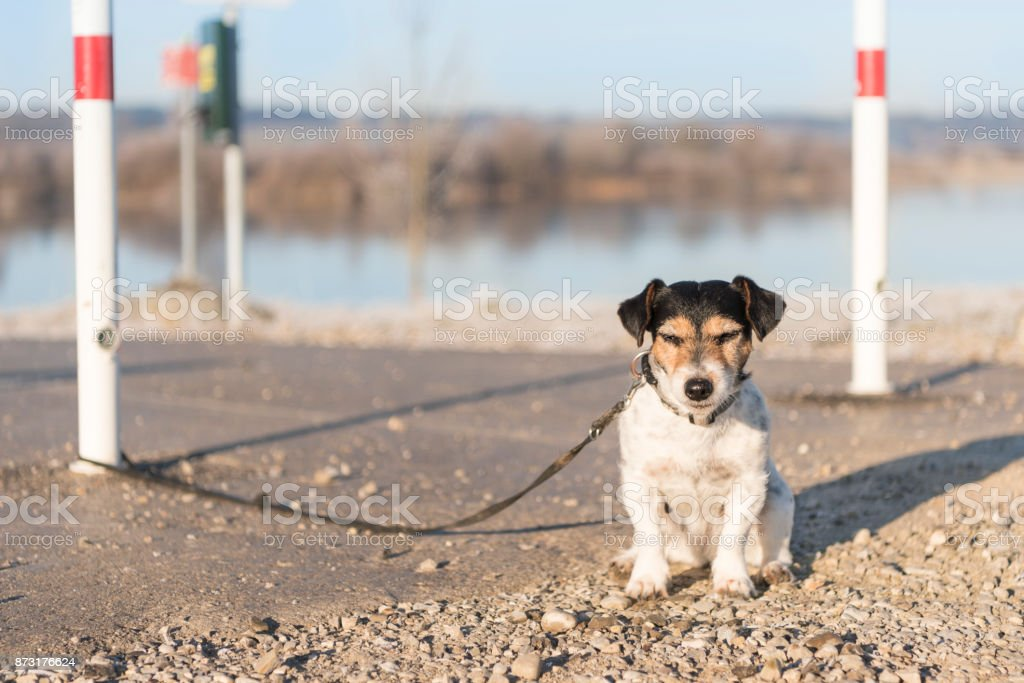 dog exposed and tethered stock photo