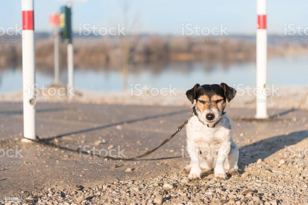 kaşif Balonlu keşif ve maruz köpek stok fotoğrafı