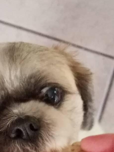 Dog eye amd nose stock photo