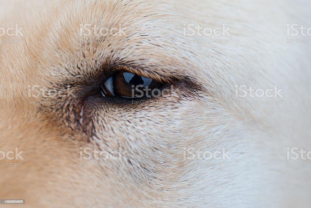 Varigated dog hair fur background