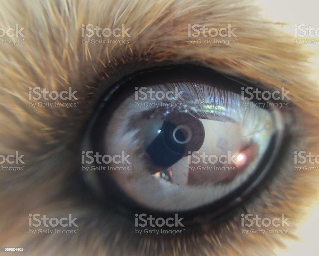 Eye, Zoom in