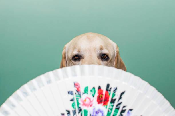 Dog eyes behind the fan