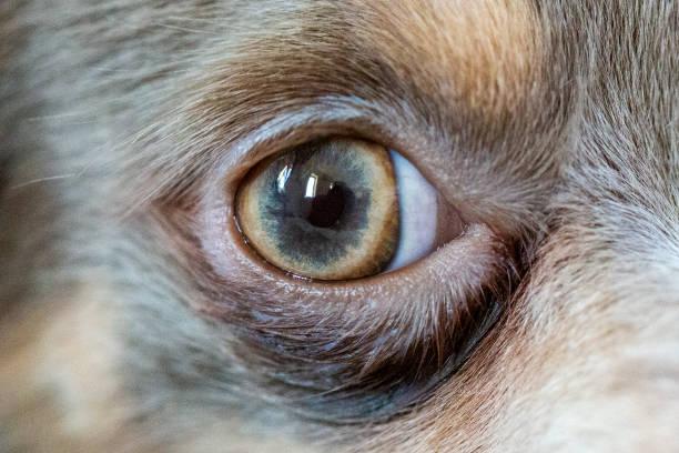 Dog eyes stock photo