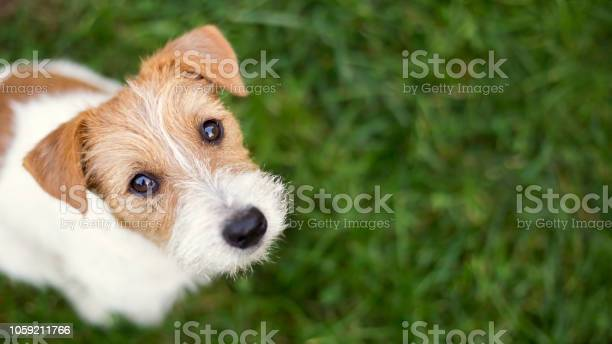 Dog face cute happy pet puppy looking in the grass picture id1059211766?b=1&k=6&m=1059211766&s=612x612&h=dn5  djygmimfmvpj3xwh95umpmqjork4svvamrtsaa=