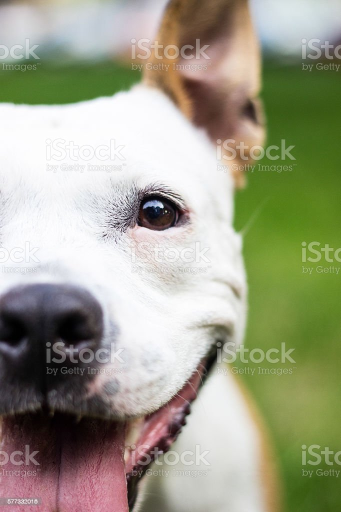 Dog face look at you stock photo