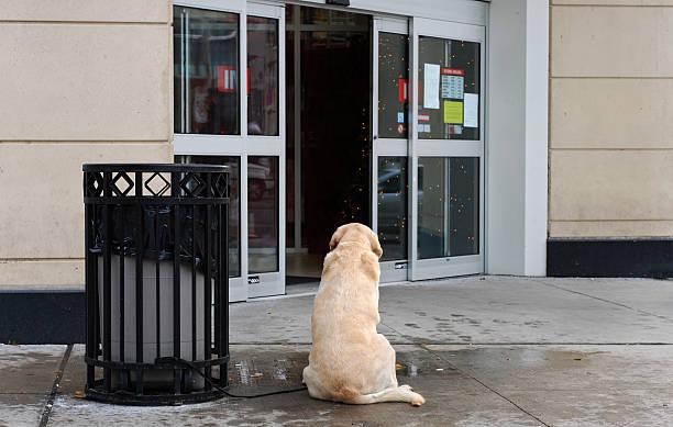 Dog faithfully waiting outside store stock photo