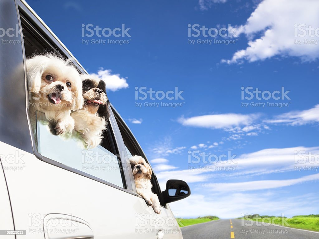 dog family traveling  road trip stock photo