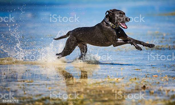Dog fast as a bullet picture id534597712?b=1&k=6&m=534597712&s=612x612&h= mie5 eh2ai1rxhjz33xvs23banzzdax2hgihtr4u8o=