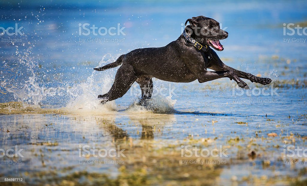 Dog fast as a bullet stock photo